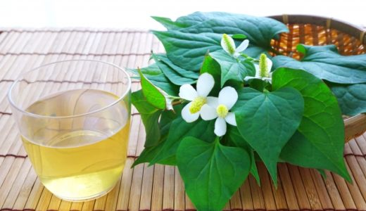 【修正記事】春になると気になるどくだみの薬用・薬効効果
