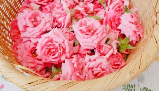 【大人の遠足】天空のバラ摘みから無農薬ローズウォーター作り体験