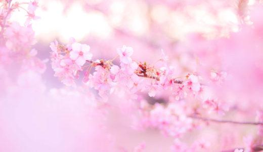 春だから?最近気になっていることをつらつらと。